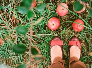 7-southampton-Long-Island-apple-picking