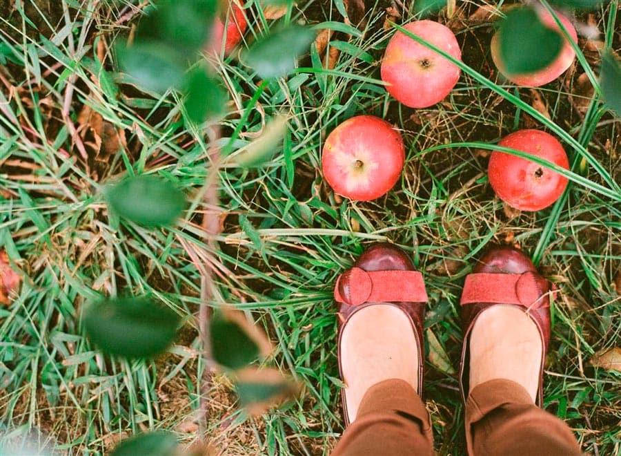 Apple Picking  | Southampton Filmy goodness